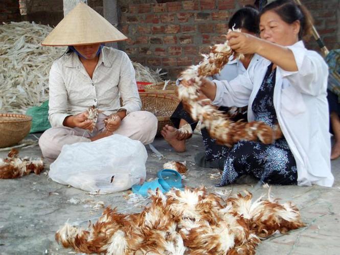 Thu mua lông gà lông vịt